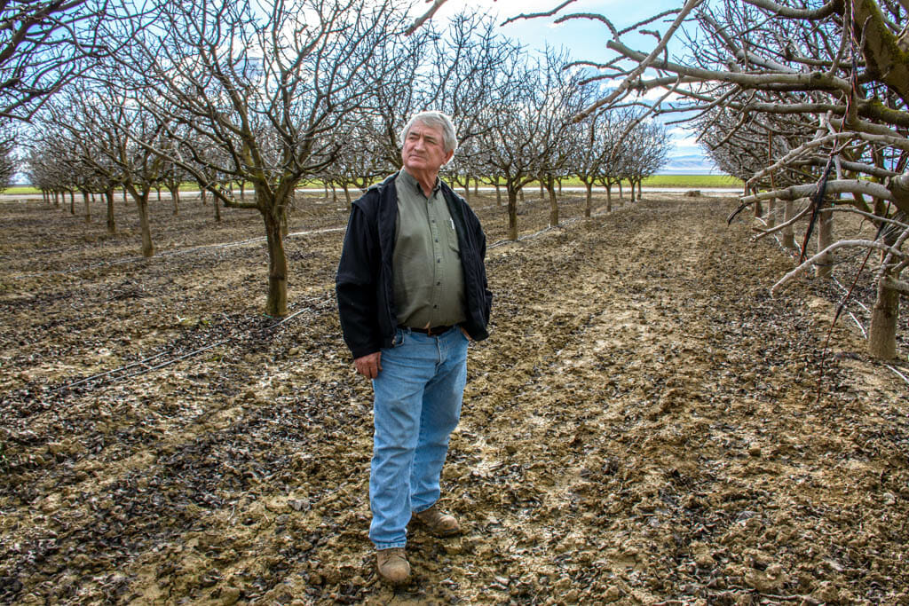 "Fourth-generation Fresno Co. farmer Chris Hurd isn't sure his farming operation will survive a fourth year of California's historic drought. """"I stayed alive last year,"" he says,"" but I'm not sure I'll make it this year. It's a treacherous, sickening situation."" His pistachio trees are fairly drought tolerant, but he and his son had to take 120 acres of lucrative almond trees out of production last summer."