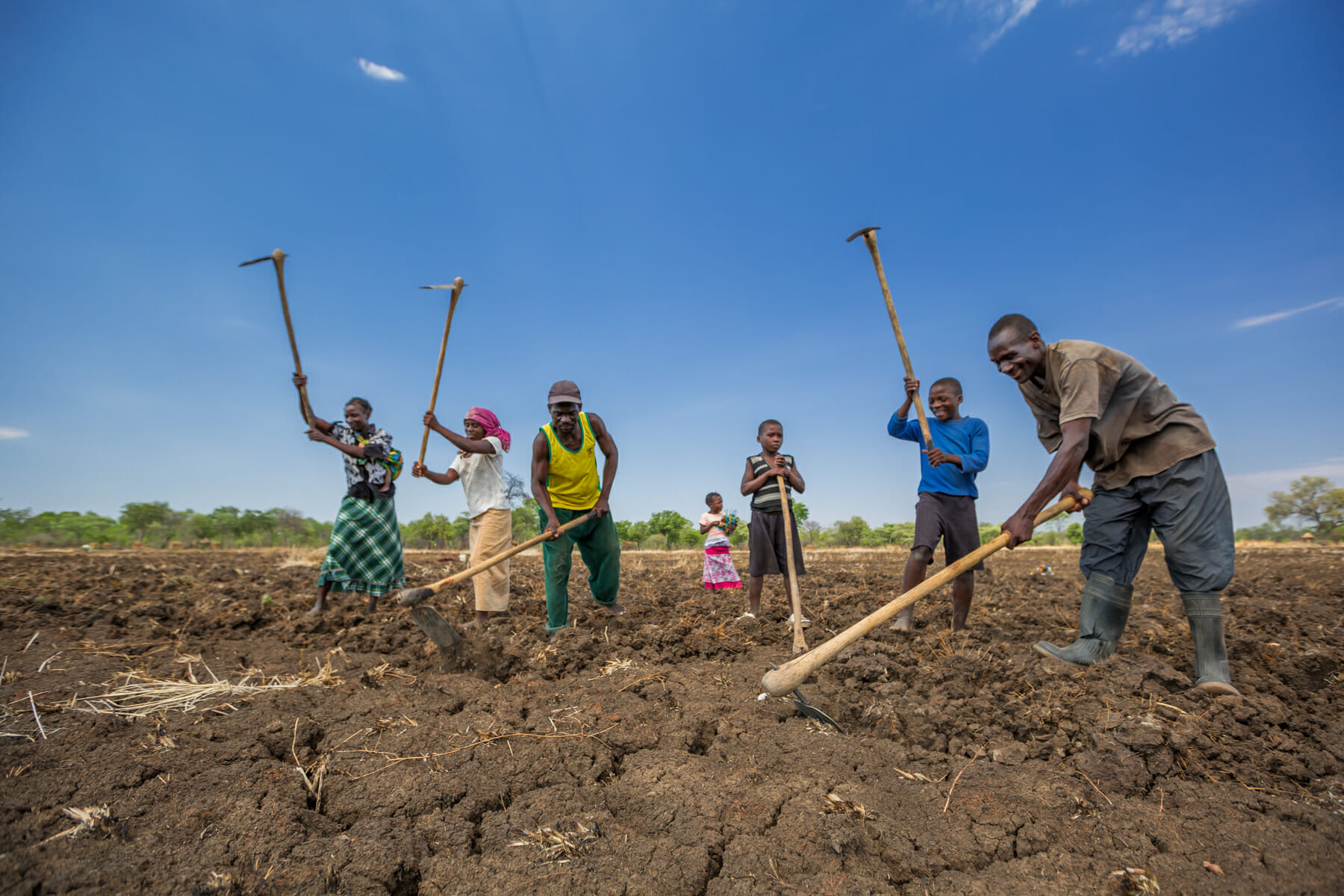 A transformed hunter and his family prepare rice fields for the imminent rains.