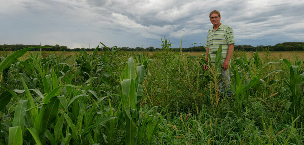 Now that he no longer has to follow strict rules about cover crops, Gail Fuller is able to experiment with a variety of plant mixes to see what combinations do the best job of keeping his land healthy while providing an income, too.
